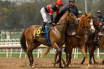 ARCADIA, CA  APRIL 7:   #6 Fatale Bere, ridden by Joel Rosario, in the post parade of the Providencia Stakes (Grade lll) on April 7, 2018 at Santa Anita Park Arcadia, CA. (Photo by Casey Phillips/ Eclipse Sportswire/ Getty Images)