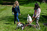 WOODBURY,  CT-051819JS01-Ella Curi, 9, of Torrington, left, and Selena Argiro, 10 of Branford, both members of the Dosey Doats 4-H group, walk goats during the annual Flanders Festival:  A Celebration of Art, Farming &amp; Nature at the Flanders Nature Center in Woodbury on Saturday. <br /> Jim Shannon Republican American