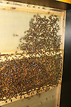 Bees at Insect Zoo