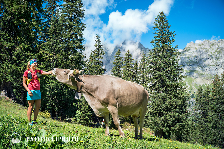 A woman trail runner stops to play with a cow and feed it a flower, Klausen Pass, Switzerland