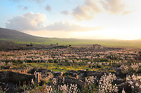 View of Volubilis, on a fertile plain in Northern Morocco, with wildflowers in bloom, with the columns of the Forum along the Decumanus Maximus in the foreground, the Triumphal Arch of Caracalla, 217 AD, on the right and the Basilica, 217 AD, in the distance. Volubilis was founded in the 3rd century BC by the Phoenicians and was a Roman settlement from the 1st century AD. Volubilis was a thriving Roman olive growing town until 280 AD and was settled until the 11th century. The buildings were largely destroyed by an earthquake in the 18th century and have since been excavated and partly restored. Volubilis was listed as a UNESCO World Heritage Site in 1997. Picture by Manuel Cohen