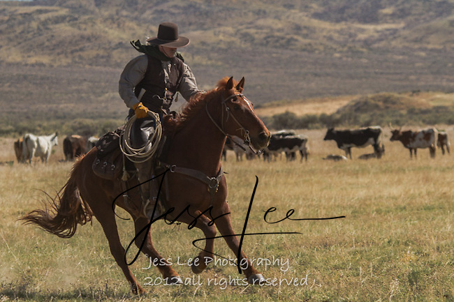 hurry Cowboys working and playing. Cowboy Cowboy Photo Cowboy, Cowboy and Cowgirl photographs of western ranches working with horses and cattle by western cowboy photographer Jess Lee. Photographing ranches big and small in Wyoming,Montana,Idaho,Oregon,Colorado,Nevada,Arizona,Utah,New Mexico.