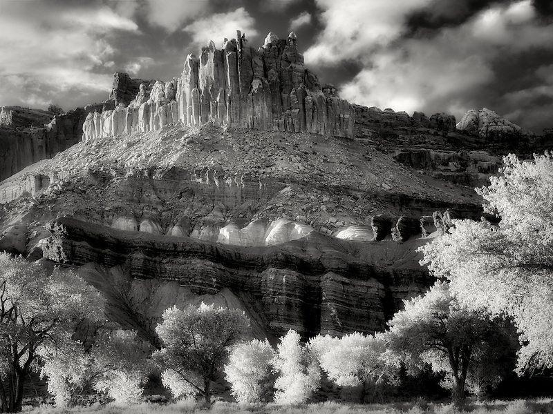 The Castle with cottonwood trees with new spring growth. Fruita, Capitol Reef National Park, Utah