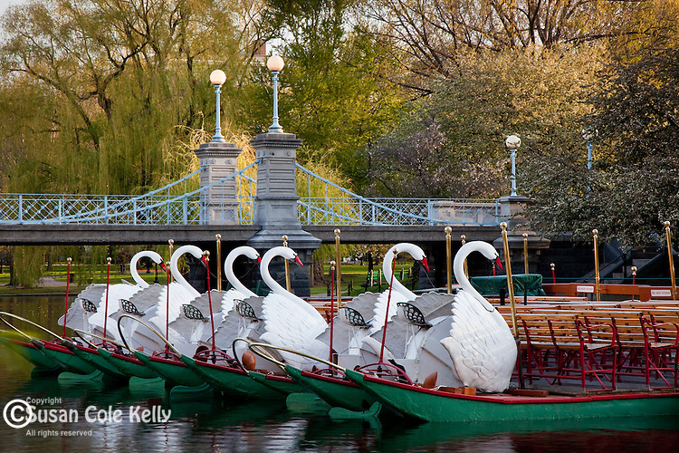 Swan boats and the Victorian bridge in the Boston Public Garden, Back Bay, Boston, MA, USA