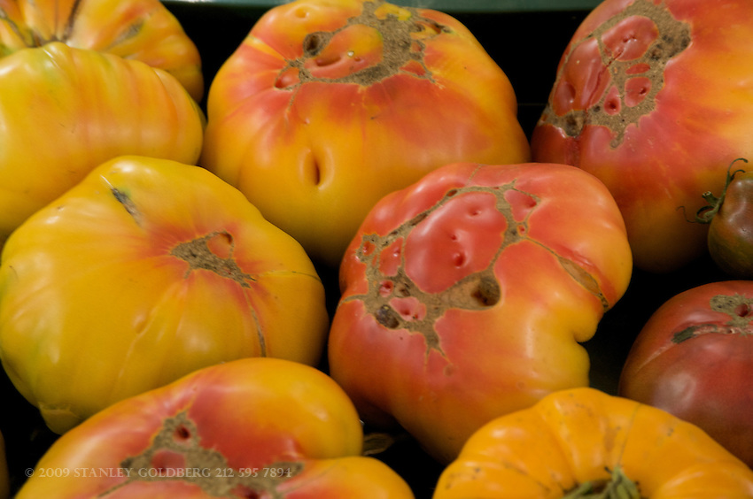 Heirloom Tomatoes are known for their delicious flavor. They come in many different sizes, colors, and varieties.