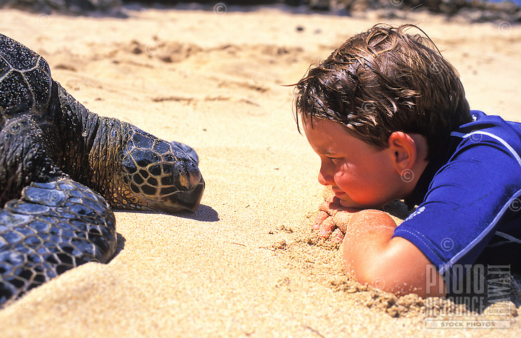 Green sea turtle comes face to face with a young boy at Laniakea Beach on Oahu's north shore