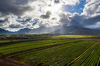 Aerial view of sunrays beaming over Wahiawa fields, with Mount Ka'ala and Wai'anae Range, O'ahu.