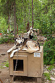 USA, Alaska, Talkeetna, a sled dog called Beezer tied up to his kennel, Huskytown