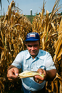 February 1983, Iowa, USA --- An Iowa farmer holds up corn cobs from his field suffering the ill-effects of the drought. --- Image by © JP Laffont
