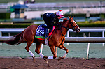 October 30, 2019: Breeders' Cup Mile entrant Got Stormy, trained by Mark E. Casse, exercises in preparation for the Breeders' Cup World Championships at Santa Anita Park in Arcadia, California on October 30, 2019. Scott Serio/Eclipse Sportswire/Breeders' Cup/CSM
