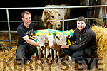 Ger O'Connor and Paddy Howard with the Four surviving calves of the Five that were born  on the Howard farm in Kilsarcon, Currow.