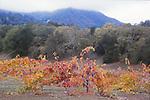 Jack London SHP, Glen Ellen, vineyad in autumn, SC57<br /> FB-S166  Back small photo.  4x6 PC