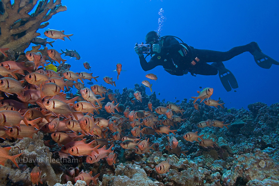 Diver (MR) with camera and schooling bigscale soldierfish, Myripristis berndti, Maui, Hawaii.