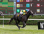 Forty Under (no. 6) wins Race 4, Aug. 25, 2018 at the Saratoga Race Course, Saratoga Springs, NY.  Ridden by  Manuel Franco, and trained by Jeremiah Engelhart, Forty Under finished 1 1/2 lengths in front of Social Paranoia (No. 5).  (Bruce Dudek/Eclipse Sportswire)