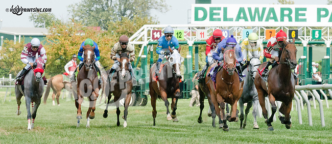 Alamanda Drive winning at Delaware Park on 8/21/13