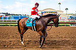 DEL MAR,CA-AUG 17: Acclimate,ridden by Florent Geroux, after winning the Del Mar handicap at Del Mar Race Track on August 17,2019 in Del Mar,California. Kaz Ishida/Eclipse Sportswire/CSM