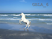 Bob, ANIMALS, collage, horses, photos(GBLA6,#A#) Pferde, caballos