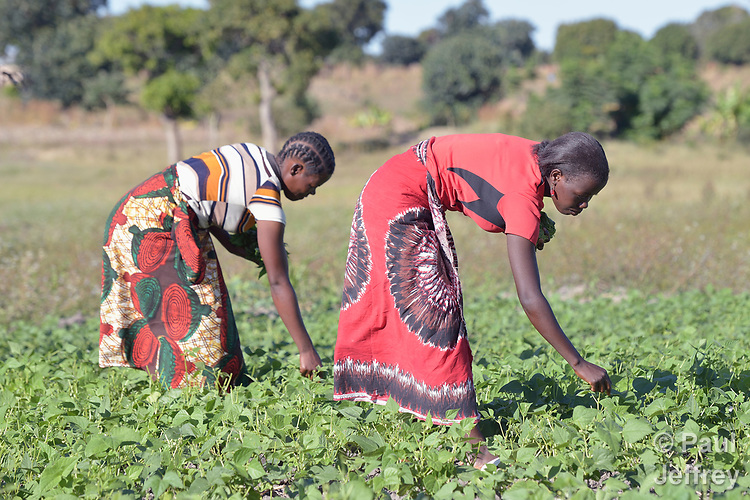 Women work in a community vegetable garden in Kayeleka Banda, Malawi, supported by the Maternal, Newborn and Child Health program of the Livingstonia Synod of the Church of Central Africa Presbyterian.