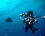 Blue Corner, Palau -- Diver tethered to a reef hook in the current at Blue Corner.