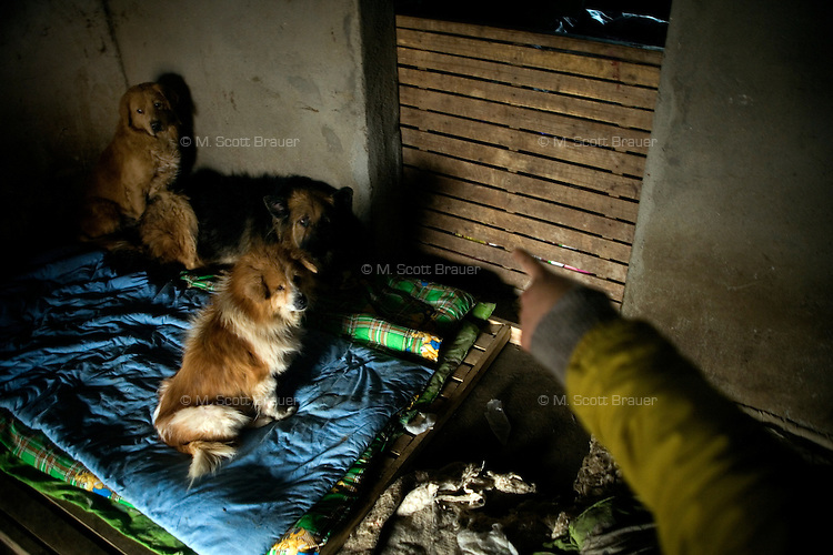 Sick dogs occupy a small farmhouse at Ha Wenjin's no-kill dog and cat rescue farm outside Nanjing, Jiangsu, China.  The sick dogs are kept separate from the rest of the dogs at the shelter.