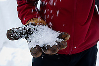 Colorado Avalanche Information Center (CAIC) Avalanche Forecaster Tim Brown (cq) looks closely at large ice crystals found in snow pack at Coon Hill, which stands about 11,150 feet in elevation, near Summit County in Colorado, Thursday, February 16, 2012. Tests at this area showed that there was a fairly hard slab of snow resting on weaker snow beneath making conditions which can lead to avalanches...Photo by Matt Nager