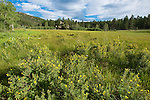 summer morning at Big Meadow at Hermit Park in the Rocky Mountains near Estes Park, Colorado, USA