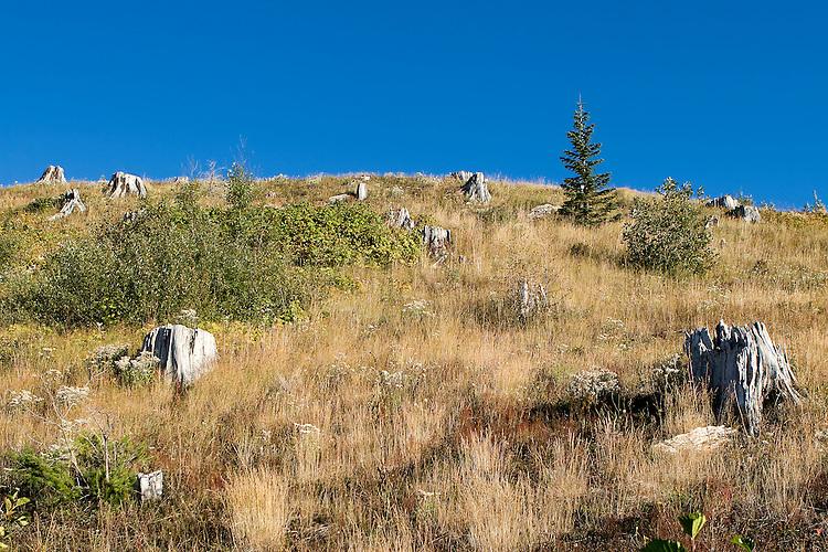 Destruction, 27 years later is still evident near Mount St. Helens Volcano, Washington State