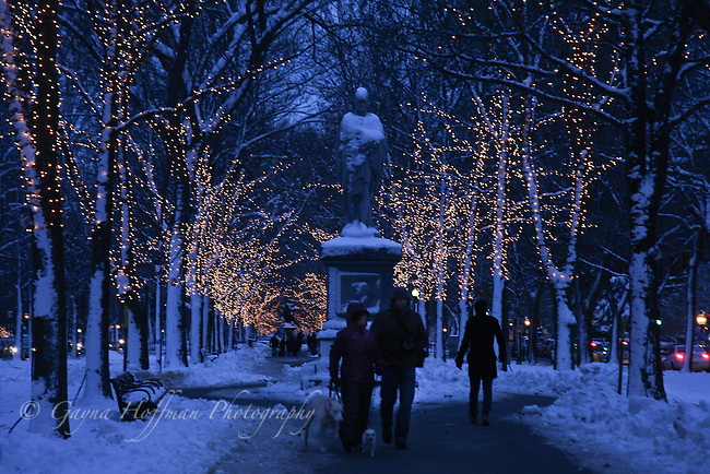 Evening winter scene on Commonwealth Ave., Boston, MA, People walking dogs.