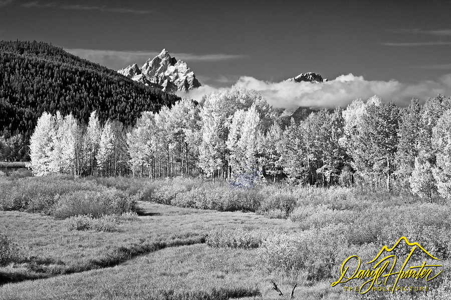 Golden aspen and new snow accent Mt. Moran in Grand Teton National Park