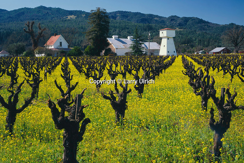 Mustard and vineyard<br />   near Oakville<br /> Napa Valley<br /> Napa County, California
