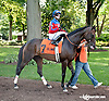 Fire Assay before The Unbridled Belle Stakes at Delaware Park on 8/15/13
