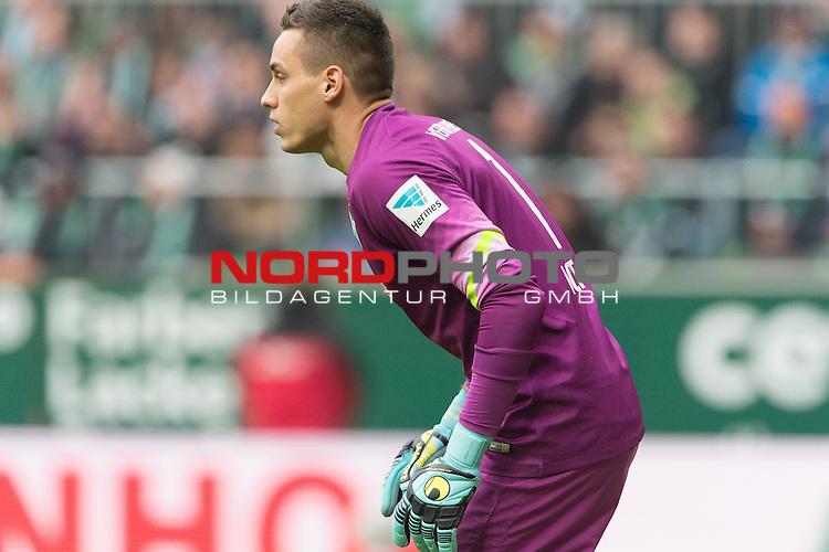 14.02.2015, Weser Stadion, Bremen, GER, 1.FBL. Werder Bremen vs 1. FC Augsburg, im Bild<br /> <br /> <br /> Raphael Wolf (Bremen #1)<br /> Einzelaktion, Halbk&ouml;rper / Halbk&ouml;rper, <br /> <br /> <br /> Foto &copy; nordphoto / Kokenge