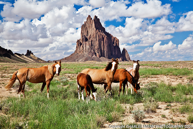 Towering seventeen hundred feet about the plain, Shiprock is the remnant of a volcanic core of basalt located just a few miles south of Shiprock, New Mexico. Horses graze peacefully on late summer grasses in front of Shiprock.