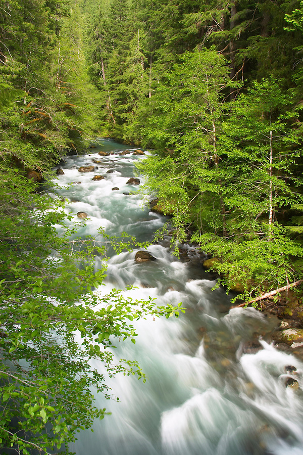 Ohanapecosh River flowing through forest, Ohanapecosh Campground, Mount Rainier National Park, Lewis County, Washington, USA