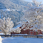 Idaho, Dalton Gardens, Coeur d' Alene. A vintage outbuilding with faded paint and rustic fence against Canfield Mountain, in a snow covered landscape, with snow hanging heavy in the trees.