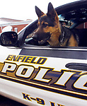 FILE PICTURE.....Enfield K9 Dog Niko, the dog is handled by Offiv\cer Gregory Skop. A Jim Michaud pic 1/2/06