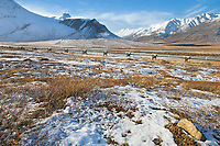 Trans Alaska oil pipeline traverses the tundra of Alaska's Arctic, north of the Brooks Range.