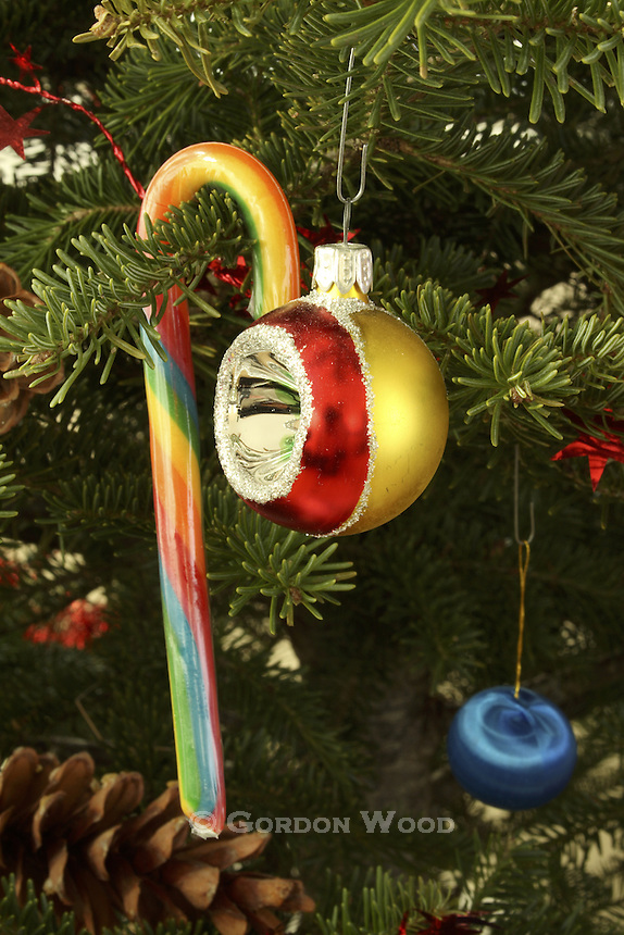 Christmas Ornaments and Candy Cane on Spruce Tree
