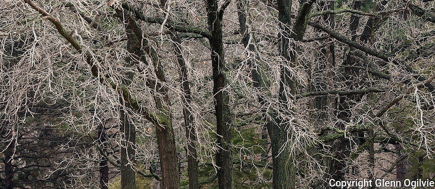 Trees along the Lake Huron shoreline at Canatara Park.