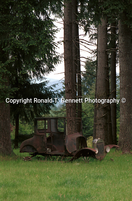 Antique Classic Vintage Car In Middle Of Fir Tree Forest Oregon