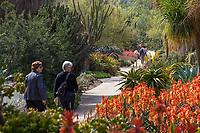 Visitors strolling path in the Desert Garden, Huntington Botanic Garden