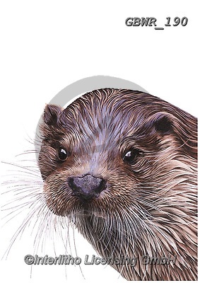 Simon, REALISTIC ANIMALS, REALISTISCHE TIERE, ANIMALES REALISTICOS, innovative, paintings+++++OliviaDeRivaz_Otter,GBWR190,#a#, EVERYDAY