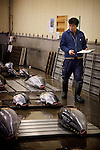 Tokyo, 1st of March 2010 - Tuna at Tsukiji wholesale fish market, biggest fish market in the world. 2:30 a.m, a man scrutinizes fresh tunas coming from the japanese coasts before the auctions.