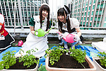 Akihabara maids plant vegetables on a rooftop garden at the Japan Agricultural Newspaper building in Akihabara on June 15, 2016, Tokyo, Japan. The annual event organised by NPO group Licolita sees maids and volunteers from local cafes and stores joining the Akihabara Vegetable Garden Project. This year 7 Akihabara maids planted habanero, peppermint, bhut jolokia and coriander. (Photo by Rodrigo Reyes Marin/AFLO)