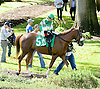 Bid Till Included before The DTHA Governors Day Stakes at Delaware Park on 10/20/12