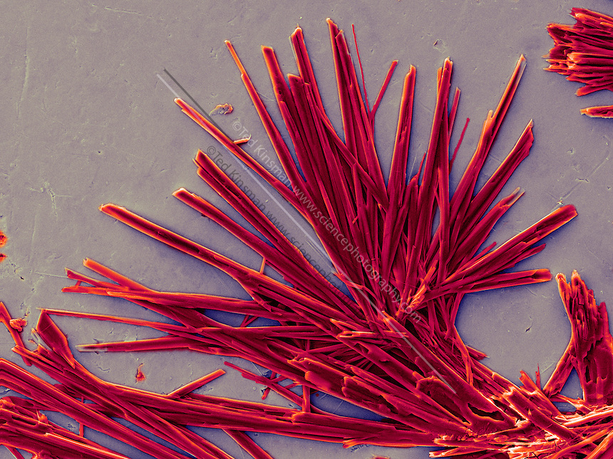 Caffeine crystals. Colored scanning electron micrograph (SEM) of caffeine crystals (1,3,7-trimethylxanthine).   Caffeine stimulates the central nervous system (CNS), increasing alertness and deferring fatigue. It occurs in coffee beans and tea leaves. Magnification: 150x and the image is .8mm wide.