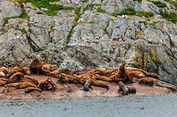 Sea lions, South Marble Island, Glacier Bay National Park (a UNESCO World Heritage Site), Alaska USA.