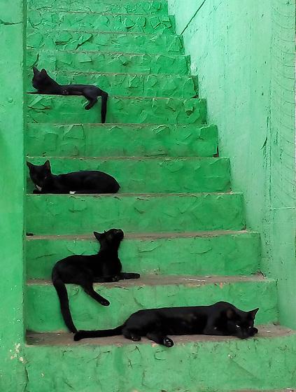 Los gatos de Pingala / Taboga,  Panamá.