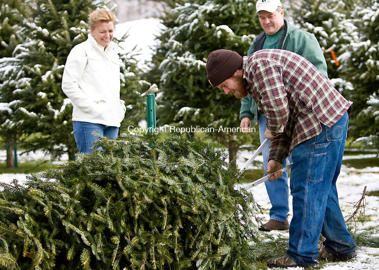 BETHLEHEM, CT - 06 DECEMBER 2009 -120609JT19--<br /> FOR COUNTRY LIFE: Shane Collett trims the trunk of a Balsam tree picked out by the Mary and Ron DePinho of Middlebury on Sunday at the March Farms Winter Wonderland in Bethlehem. The area, open every day from 10 a.m. to 5 p.m. until Christmas, also features an igloo made of hay, a speaker tower, airblown Christmas characters, a Christmas tree forest, and possibly a greeting from the March family dog, a chocolate Labrador named Bubba.<br /> Josalee Thrift Republican-American