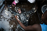 KISANGANI, DEMOCRATIC REPUBLIC OF CONGO MARCH 4: Crew members wash Dola, a chimpanzee, that they bought for US$ 25, while waiting for their boat to leave the Kisangani port for the capital Kinshasa on March 4, 2006 in Kisangani, in Congo, DRC. Dola died a few days later from an unknown disease. Many animals are taken to Kinshasa and sold as pets or for the meat. The Congo River is a lifeline for millions of people, who depend on it for transport and trade. The journey from Kisangani to Kinshasa is about 1750 kilometers, and it takes from 3-7 weeks on the river, depending on the boat. During the Mobuto era, big boats run by the state company ONATRA dominated the traffic on the river. These boats had cabins and restaurants etc. All the boats are now private and are mainly barges that transport goods. The crews sell tickets to passengers who travel in very bad conditions, mixing passengers with animals, goods and only about two toilets for five hundred passengers. The conditions on the boats often resemble conditions in a refugee camp. Congo is planning to hold general elections by July 2006, the first democratic elections in forty years. (Photo by Per-Anders Pettersson)